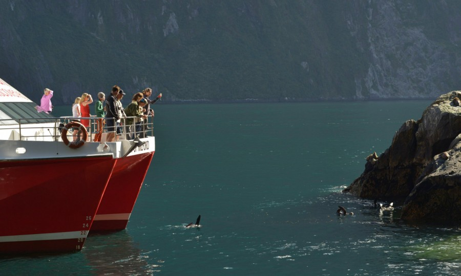Spotting seals in the water in Milford Sound v2